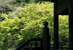 110420妙本寺新緑3