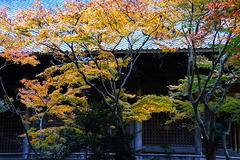 161202妙本寺紅葉2