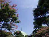 050903本覚寺サルスベリ