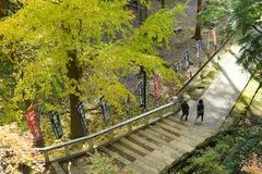 141207建長寺半僧坊への道