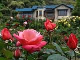 050514鎌倉文学館バラ