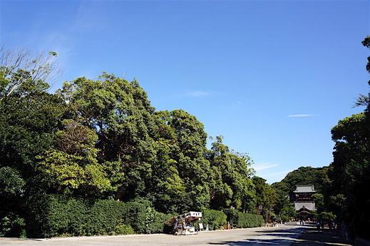 160909鶴岡八幡宮1