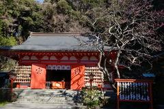 200121荏柄天神社ウメ2