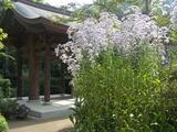 051015海蔵寺シオン