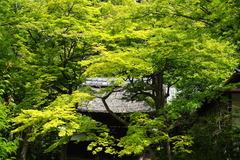 140528円覚寺新緑2
