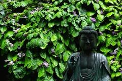130612東慶寺イワタバコ1