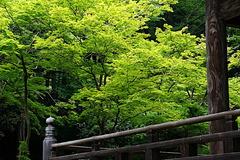 180502妙本寺新緑6