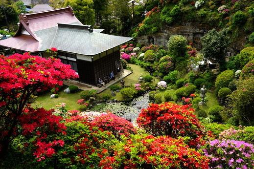 160425仏行寺ツツジ2