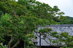 170802円久寺サルスベリ