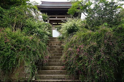 200919海蔵寺ハギ1