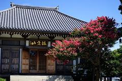 190807長谷寺サルスベリ2