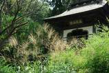 060909浄智寺ススキ、ハギ