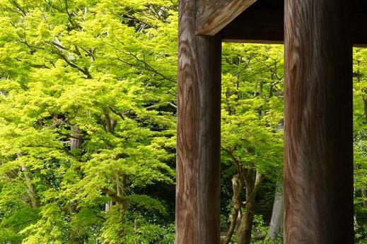 140416妙本寺新緑