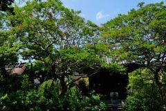 140811宝戒寺サルスベリ