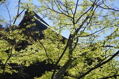 190404建長寺新緑