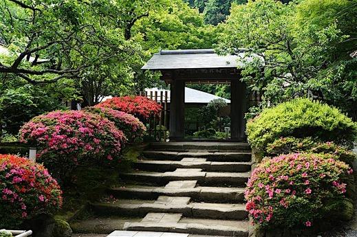 160529浄智寺サツキ