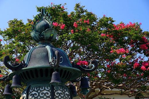 200816本覚寺サルスベリ2