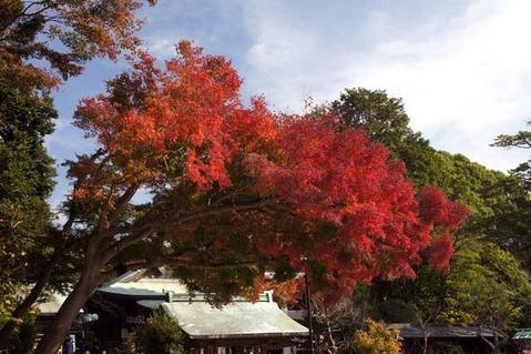 101201鎌倉宮紅葉1