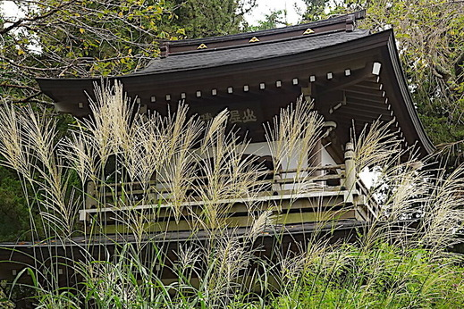 200914浄智寺ススキ
