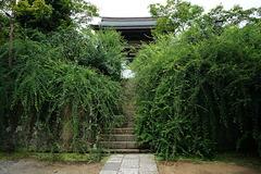 170829海蔵寺ハギ1