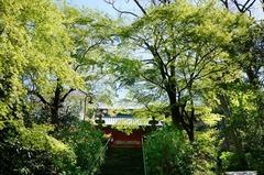130404妙本寺新緑