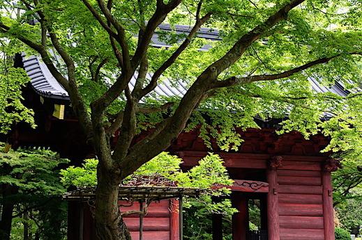 180502妙本寺新緑1