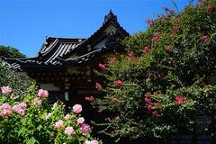 160819妙隆寺フヨウとサルスベリ
