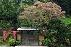 160911建長寺サスズベリ
