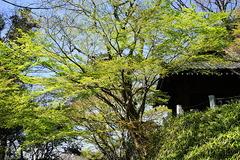 200324妙本寺新緑
