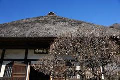 130224円覚寺ウメ2