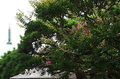 160725本覚寺サルスベリ