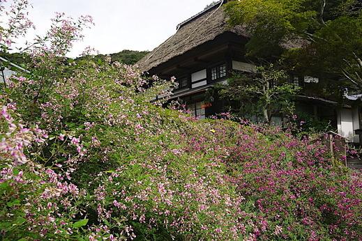 200919海蔵寺ハギ2