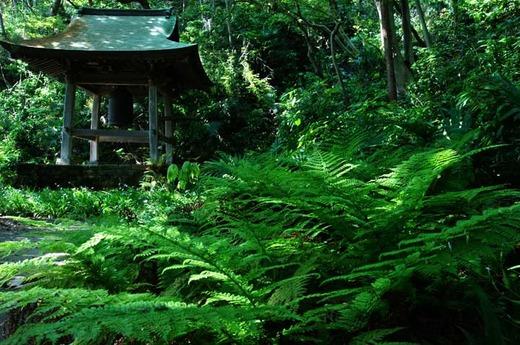 130509妙法寺シダ