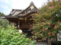 150903妙隆寺サルスベリ