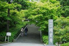150529円覚寺新緑1