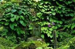 120524東慶寺イワタバコ