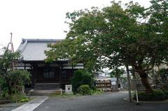 160725本興寺サルスベリ