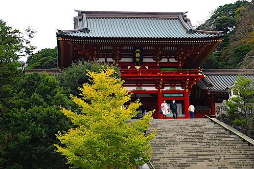 201202�岡八幡宮黄葉