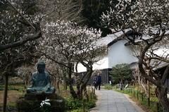 160306東慶寺ウメ3