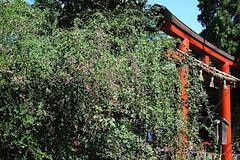 170918鶴岡八幡宮ハギ