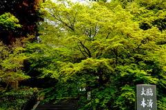 160411円覚寺新緑1