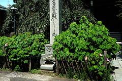 180711妙隆寺フヨウ