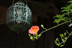 120918海蔵寺ノウゼンカズラ