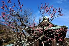 180218海蔵寺コウバイ2