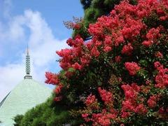 100810本覚寺サルスベリ2