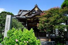 140811妙隆寺フヨウとサルスベリ