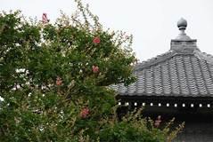 090725本覚寺サルスベリ