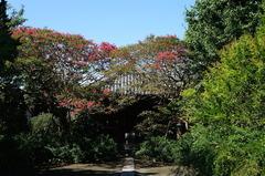 150827宝戒寺サルスベリ