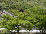 060422円覚寺新緑