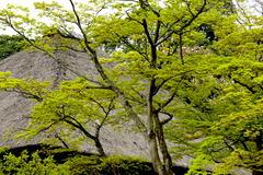 160411円覚寺新緑2